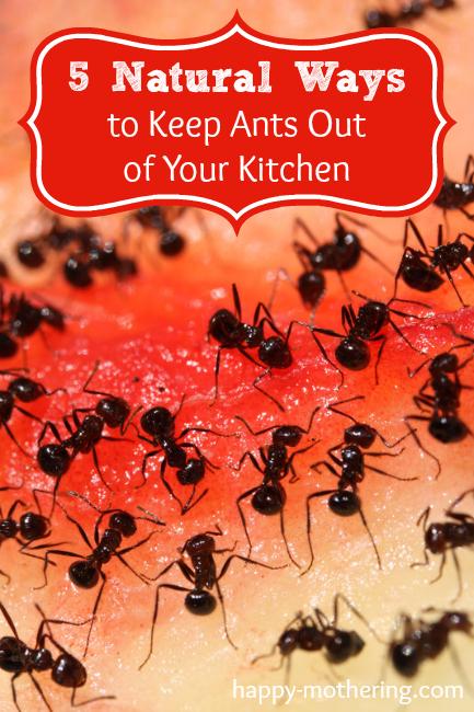 natural-ways-ants-kitchen