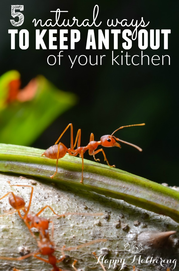 It's that time of year again when ants invade our homes. Be sure to learn these 5 natural ways to keep ants out of the kitchen to save yourself frustration!