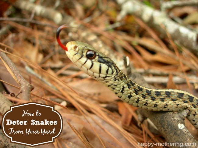 How To Deter Snakes From Your Yard Happy Mothering